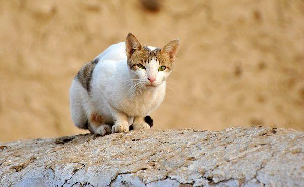 Cinco Emociones que Produce Tener un Gato