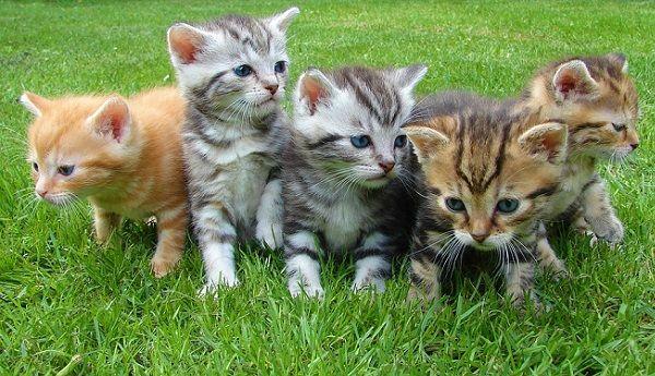 Video de Bebé Jugando con el Gato