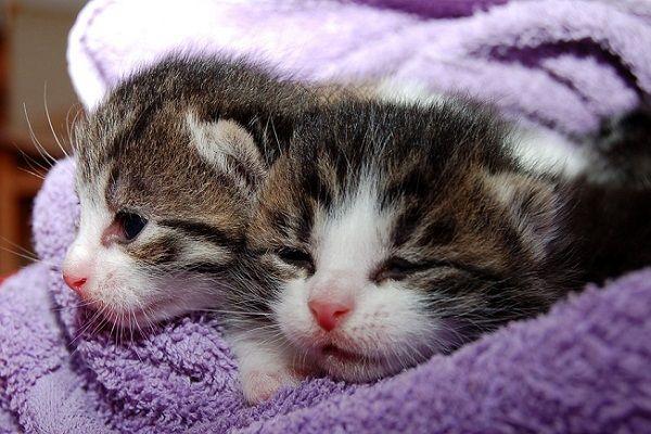 Síntomas de Que tu Gato está Aburrido