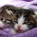 Todo lo que Debes Saber sobre Gatos