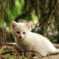 Celebra el Día Mundial de los Animales