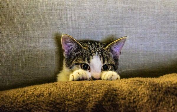 Consejos para Hacer las Mejores Fotos a tus Gatos