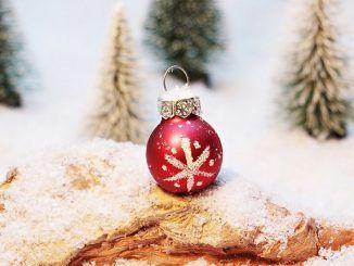 Cómo Proteger el Árbol de Navidad frente al Gato