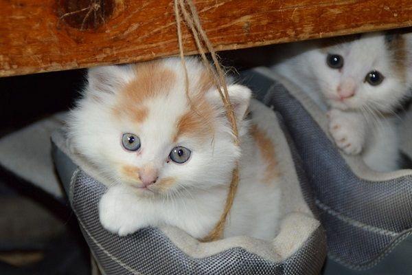 Recomendaciones Antes de Tener un Gato