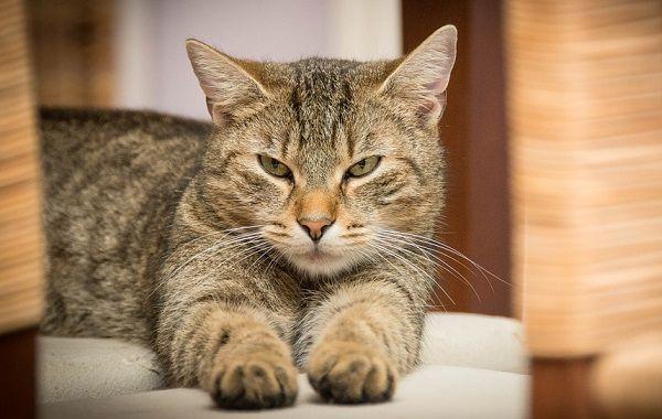 Principales Causas de Estrés en los Gatos