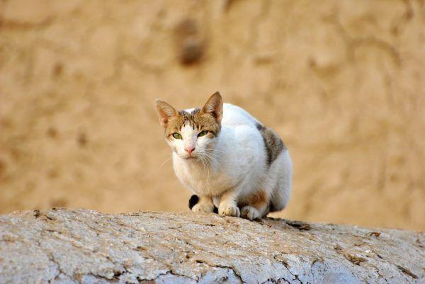 ¿Cuáles son las Características del Gato Anciano?