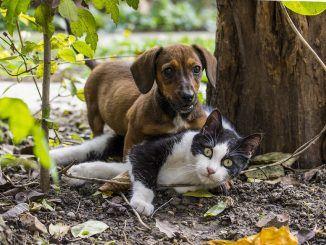 Un Gato Da Esta Bienvenida a un Perro