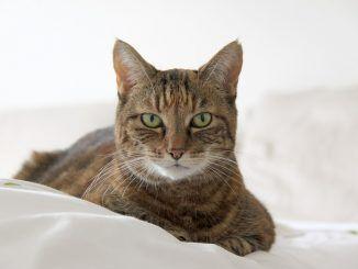 Regalar un Gato en el Día de la Madre