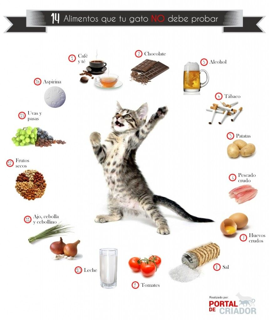Alimentos que tu Gato NO debe Comer