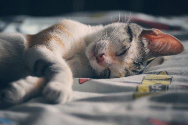Ventajas de Pasar las Vacaciones con tu Gato