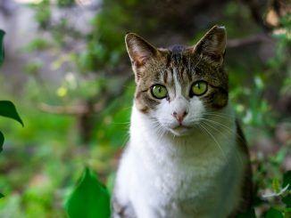 Cinco Ventajas de Tener un Gato en Casa