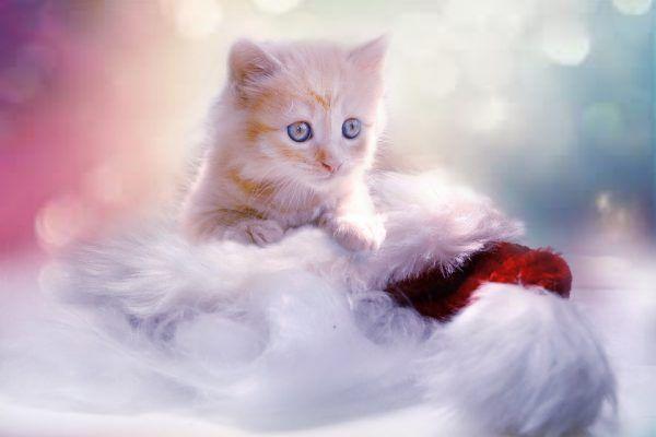 Cinco Errores que Cometes al Cuidar del Gato