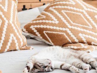 Miso, el Gato de Macarena Gea, Vuelve a Casa