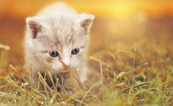 Terapia con gatos y perros frente al alzhéimer
