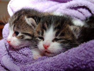 Desventajas de Tener Dos Gatos en Casa