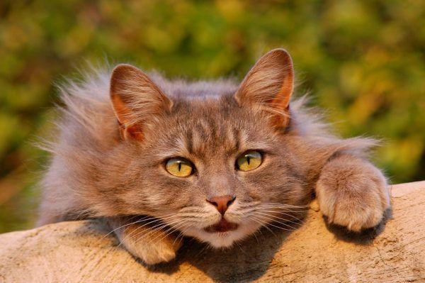 5 Beneficios de la Peluquería Felina