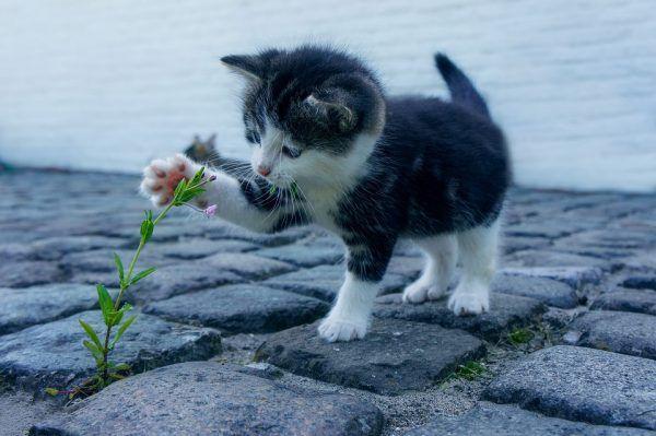 Cuatro Condiciones para Adoptar un Gato