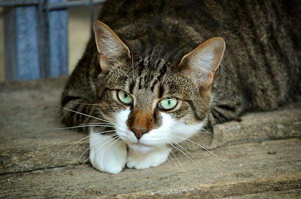 Razones para Adoptar un Gato en Lugar de Comprarlo