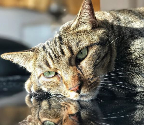 La tristeza de Vanesa Romero por la Muerte de su Gato