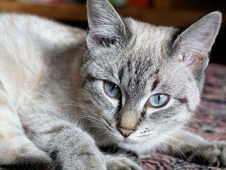 ¿Con Quién se Queda el Gato en Caso de Divorcio?