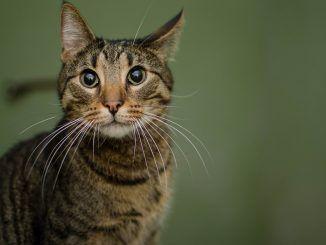 Cómo Identificar una Tienda de Mascotas Online de Confianza