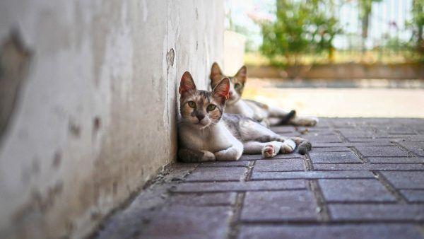 5 Propósitos de Año Nuevo para Dueños de los Gatos