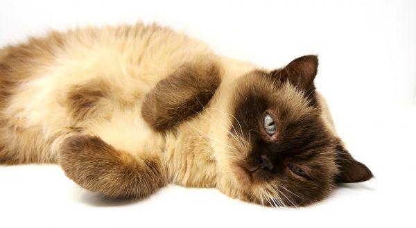 6 Emociones que te Aporta la Convivencia con el Gato