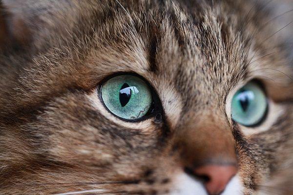 Cómo Inspirarte para Elegir el Nombre de Tu Gato