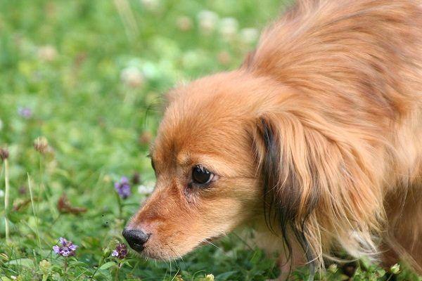 5 Consejos para Ser Feliz con tu Perro en Semana Santa