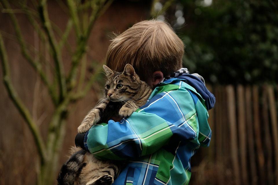 Cómo Inculcar en tus Hijos el Respeto a los Gatos