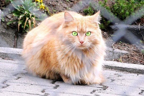 Mundo Animalia, App para el Cuidado de los Gatos