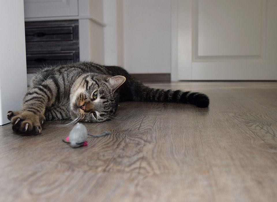 JUGUETES para que los gatos jueguen solos