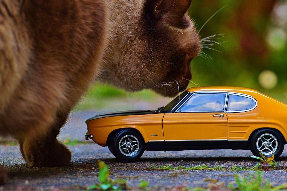 Viajar en coche con un gato, cómo hacerlo con éxito