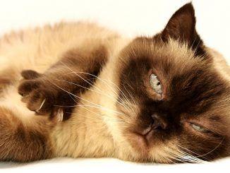 Tips para CEPILLAR a tu gato
