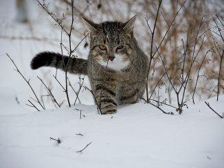 Cómo ayudar al gato a pasar mejor el INVIERNO