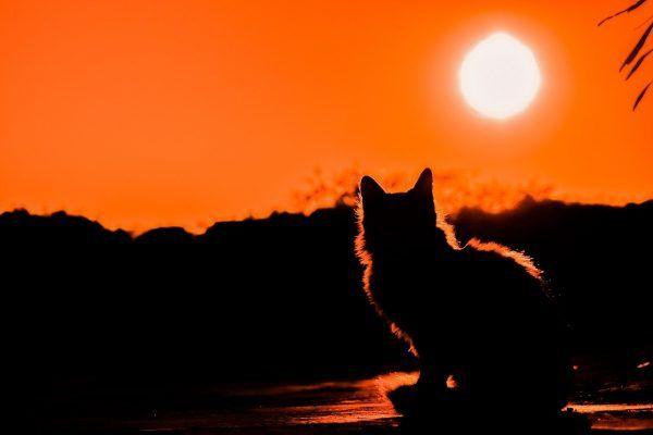 gato-al-sol